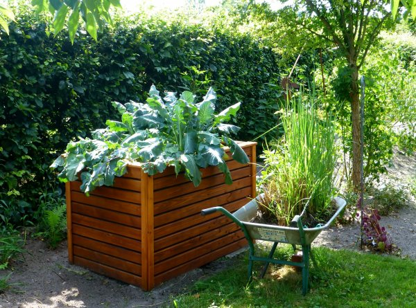 ekologiczny ogrodek