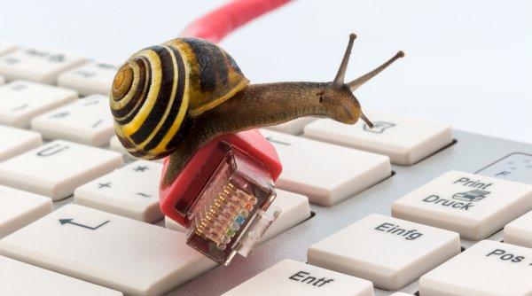 Slimak - powolny internet