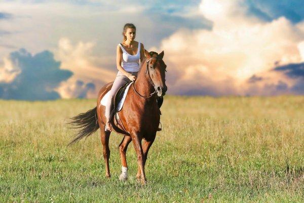 koń amazonka czaprak ujeżdżeniowy